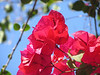 Flowers : 2 galleries with 32 photos